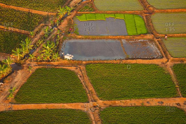 Rice paddies, Bagan, Myanmar