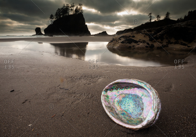 Abalone shell on Second beach