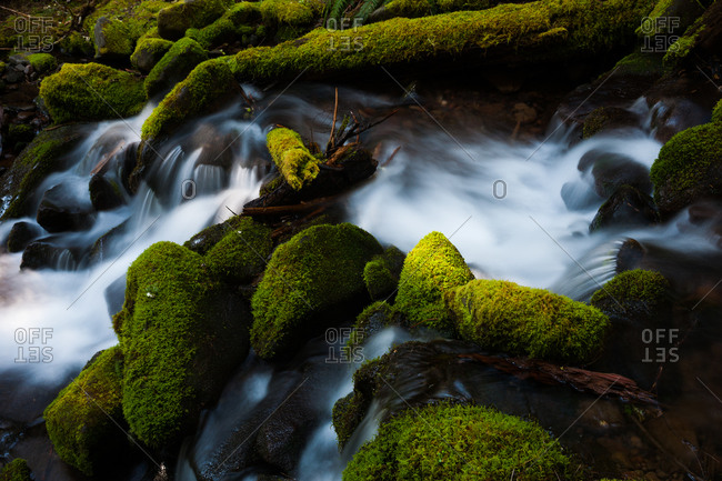 Barnes Creek with water flowing over mossy rocks