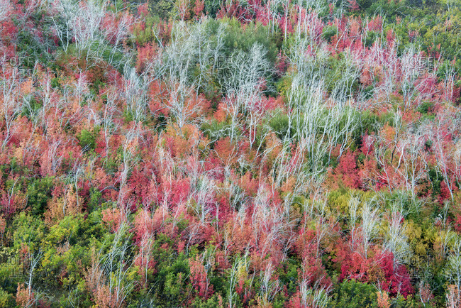 Elevated view over the treetops and the autumn foliage