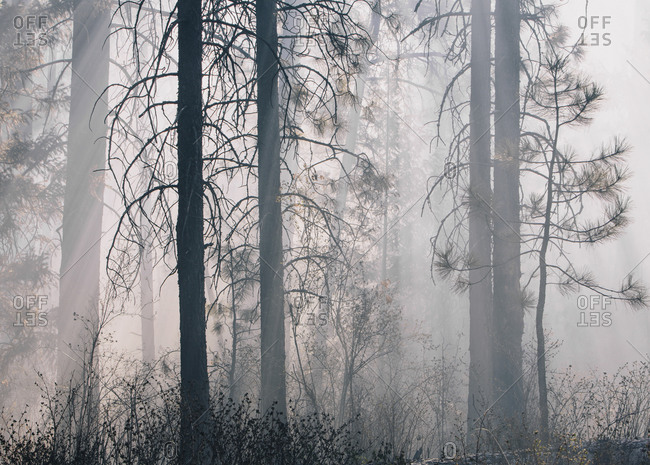 Smokey forest from controlled burn