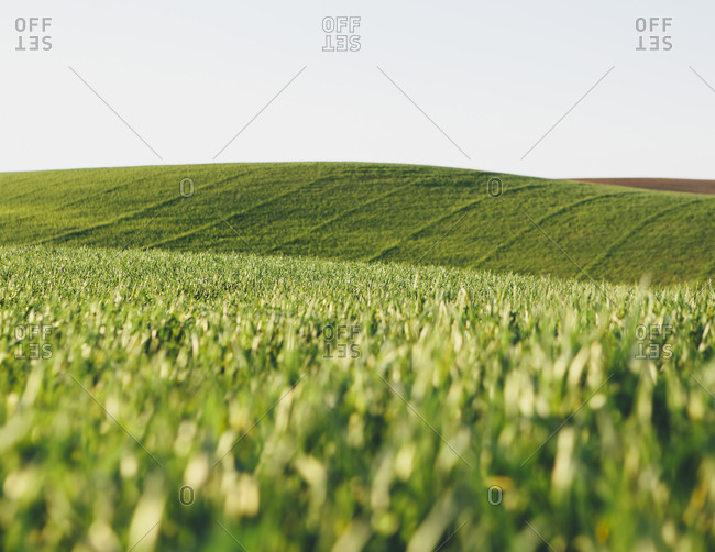 View across green cropland