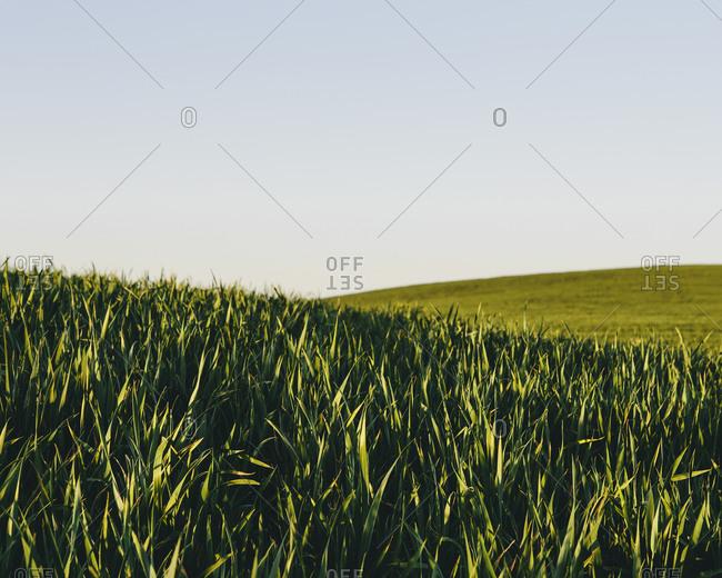 Rolling hills in a landscape