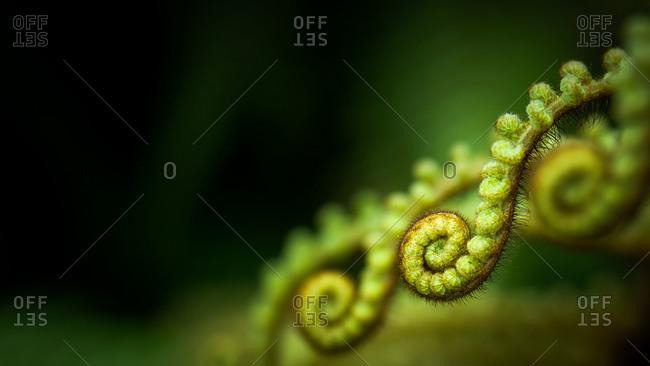 Close up of a tree fern