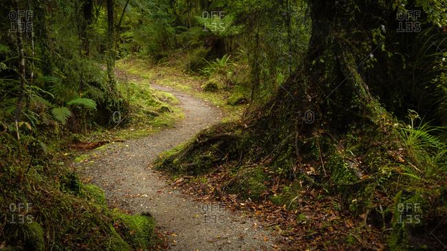 Path through rainforest in Mahinapua Reserve