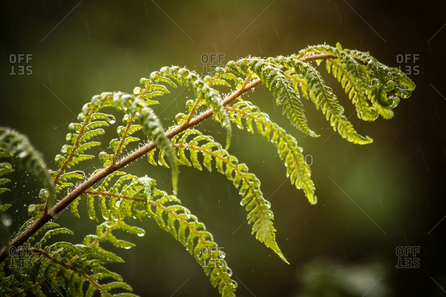 Close up of a fern frond