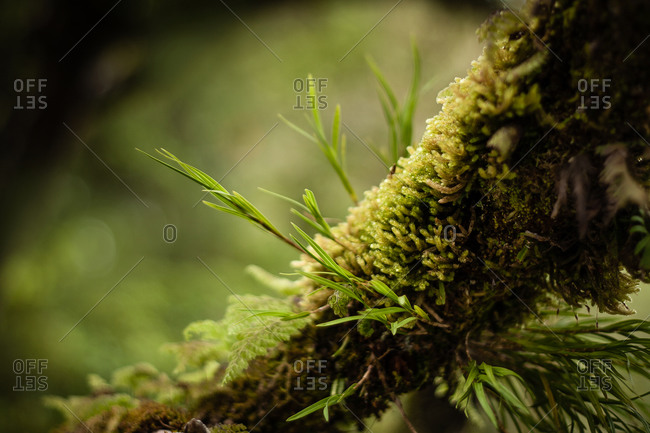 Close up of moss, ferns and epiphytes growing on a tree trunk