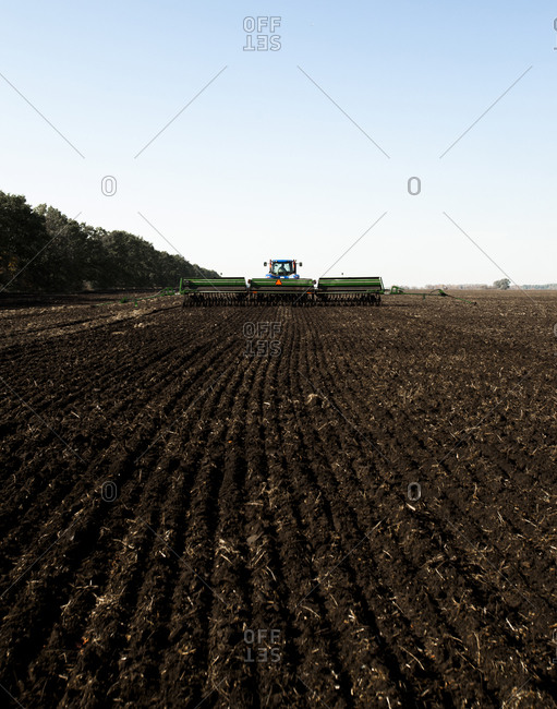Planting of wheat