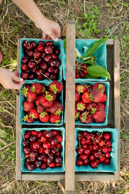 Freshly picked  strawberries,cherries and berries