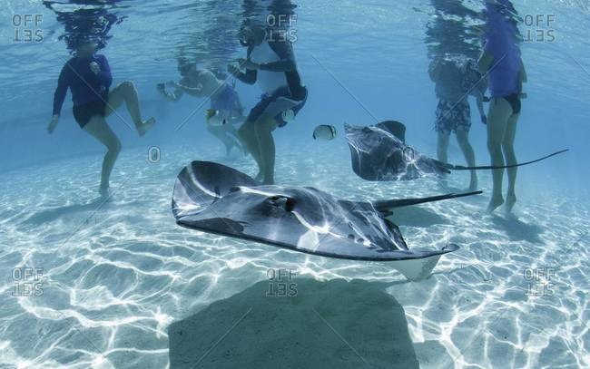 Group of tourist unaware of nearby sting rays