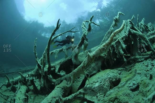 Diver exploring fallen tree underwater
