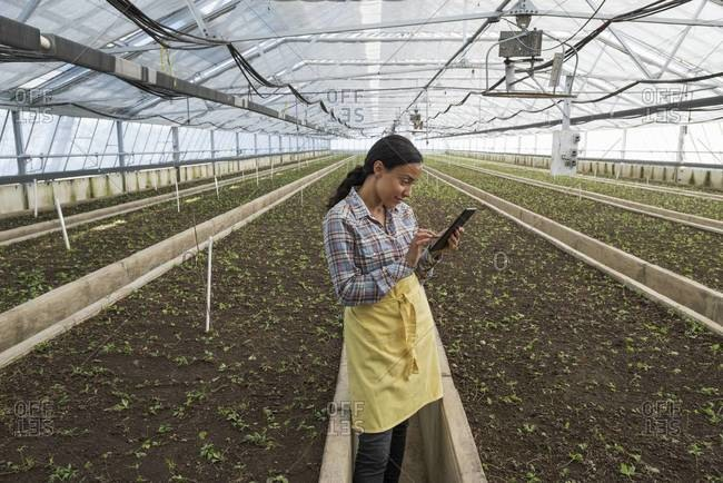 A woman using a digital tablet at commercial greenhouse