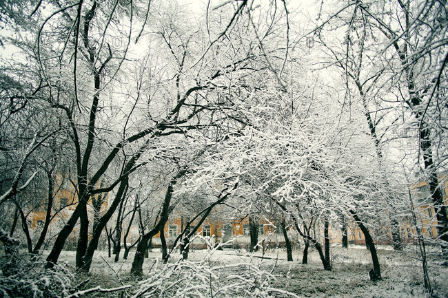 Snow covered trees in urban park