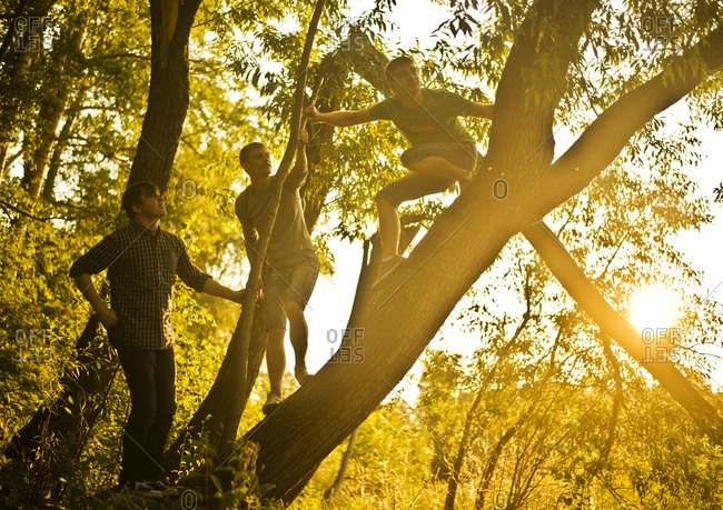 Men climbing tree in forest