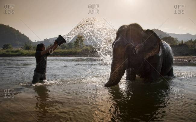 CHIANG MAI, THAILAND - FEBRUARY 11, 2011: A mahout splashes an elephant in a river with water at the Elephant Nature Park