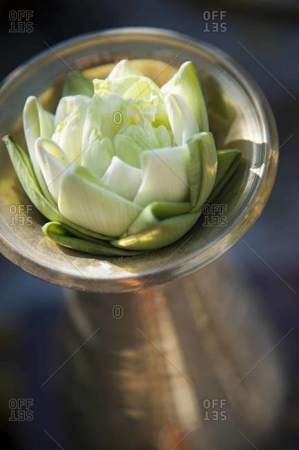 Close-up photo of a lotus blossom offering at a temple in Chiang Mai