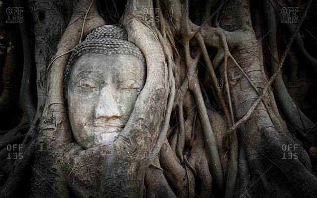 Buddha head overgrown by a fig tree in Wat Mahathat, Ayutthaya Historical Park, Thailand