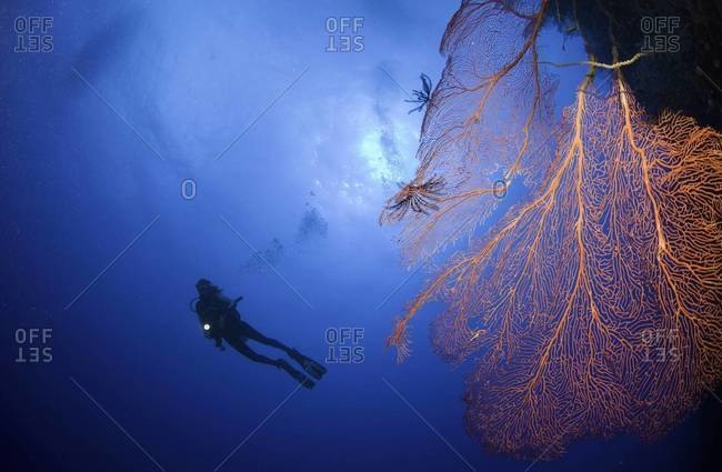 Silhouette of female scuba diver exploring coral reef, Fiji