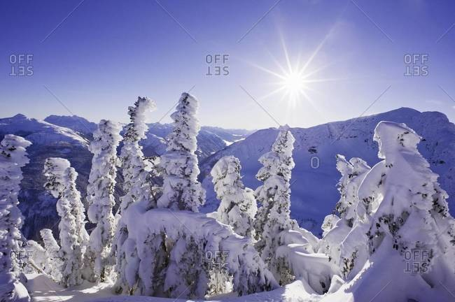 Snow-covered trees on mountain top, Coast mountains, BC, Canada