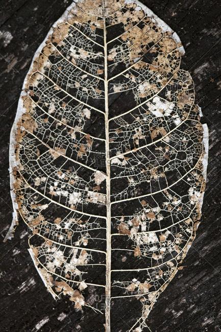 Close up of a decomposing leaf