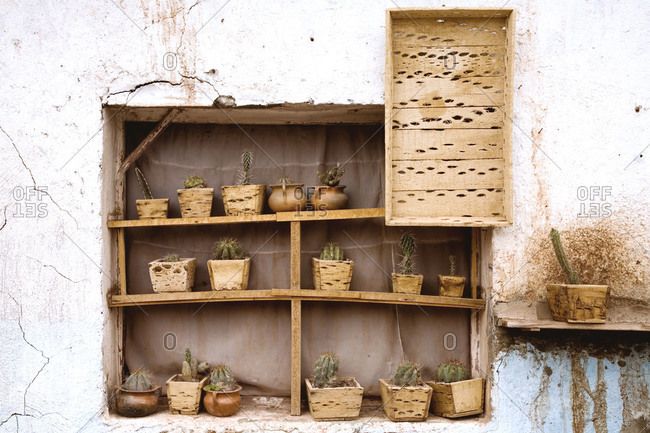 Cactus collection in window in an Argentinean village