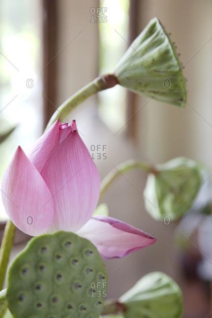 Flower growing in Vietnamese spa salon