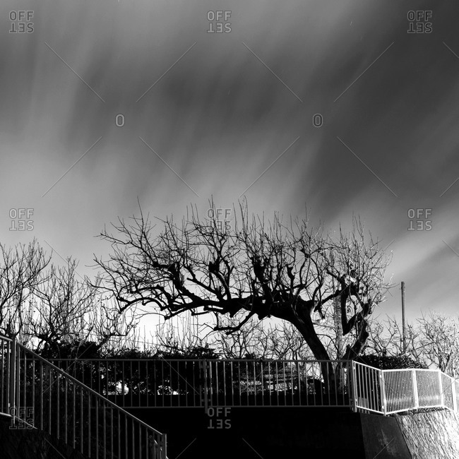 Tree in Yamato, Kanagawa Prefecture, Japan