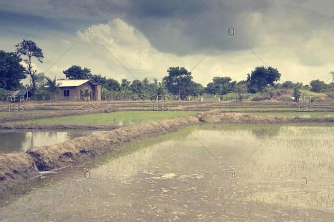 Sri Lanka, North Central Province, Anuradhapura, fluted rice fields