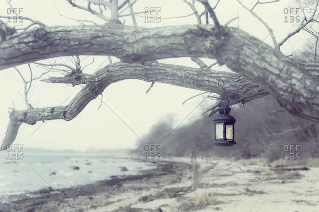Germany, Mecklenburg-Western Pomerania, Ruegen, Lantern hanging at tree