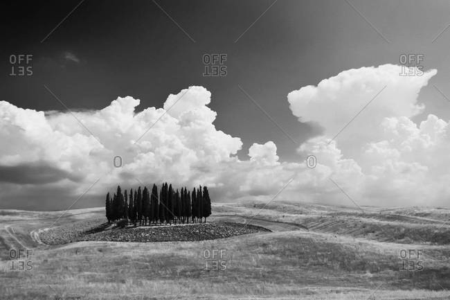 Italy, Tuscany, San Quirico d'Orcia, landscape with group of cypresses