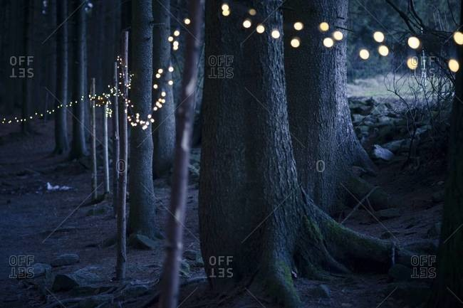 Germany, Bavaria, Sankt Englmar, Fairy lights in forest