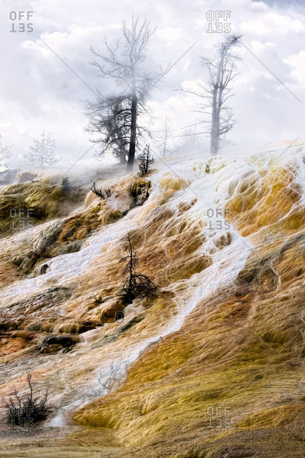 Spooky view of mineral springs and a dead tree in Yellowstone National Park