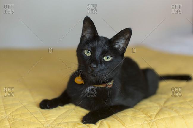 Black cat on bed in bedroom