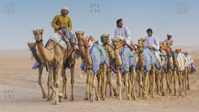 Dubai, UAE - April 20,2012: Camel caravan through desert