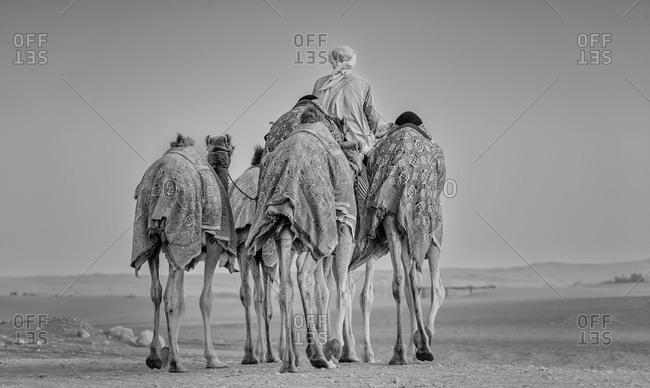End of a camel caravan
