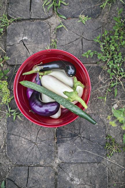 Homegrown vegetables in bucket, overhead view