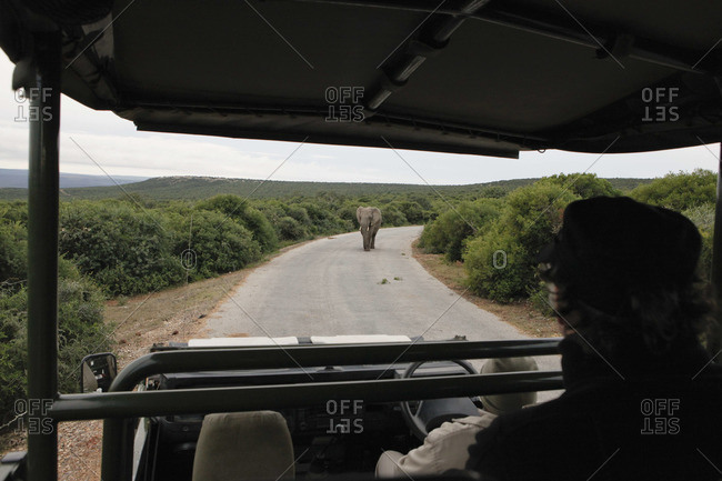 Tourist in safari vehicle