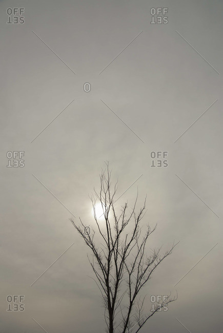 Bare tree on an overcast day, sun visible through clouds