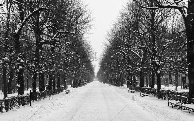 Snow covered road and bare trees in winter
