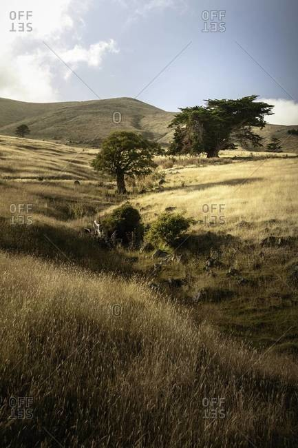 Grassland along the Pigeon Bay trail on the Banks Peninsula, New Zealand