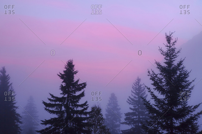 Foggy pink sunrise