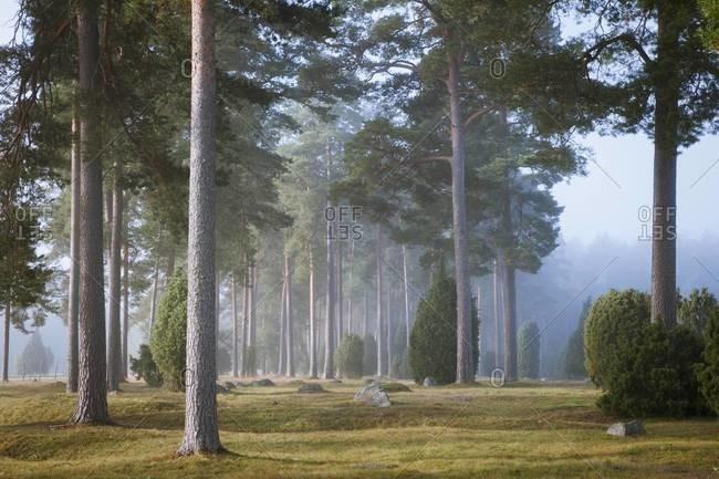 Morning forest, Ronneby, Blekinge, Sweden