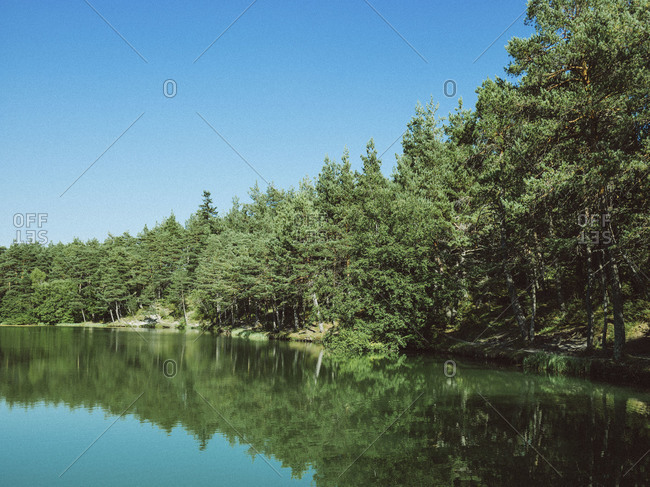 Scenery view of evergreen forest and lake