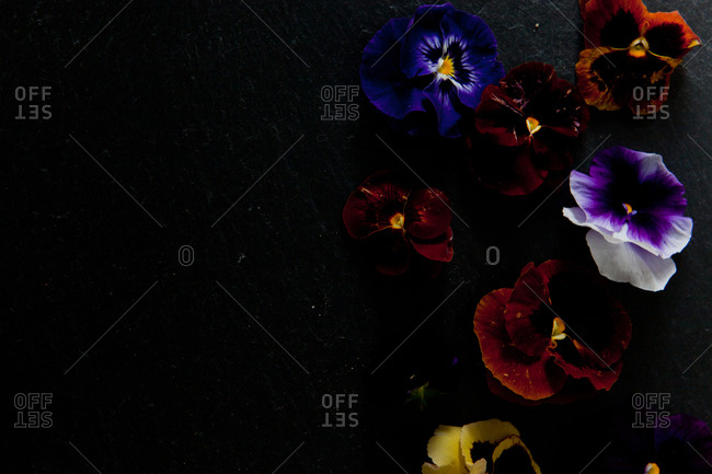 Pansy flowers arranged on black background