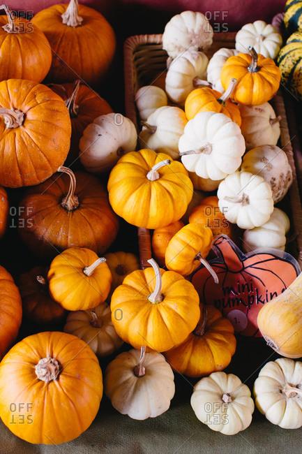 Mini pumpkins arranged on farmers market