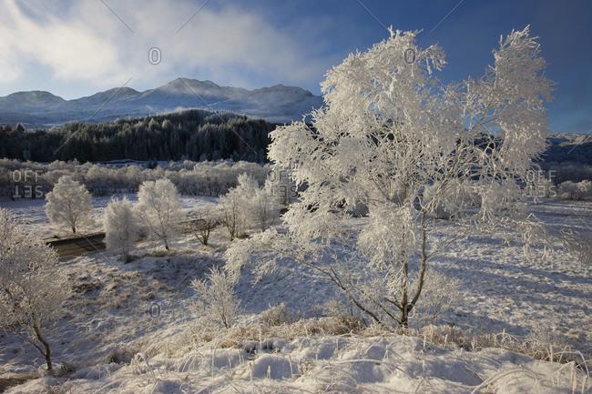 Frosty scene in Glenfinnan, Scotland