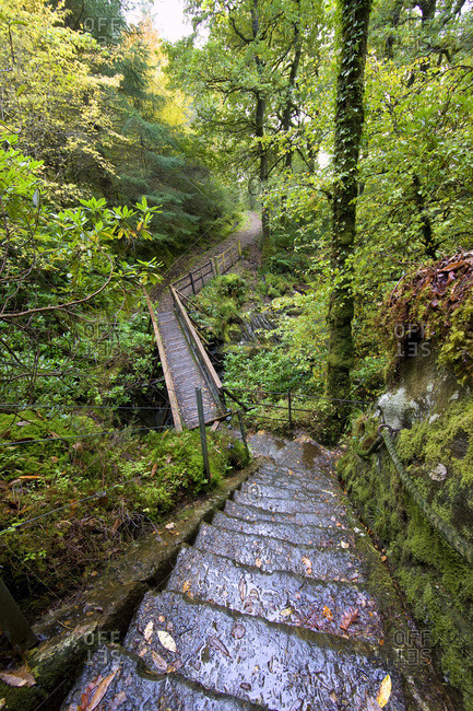 Steps leading through a forest at Sutherlands Grove, Scotland