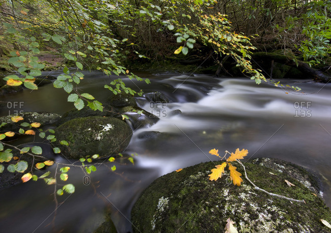 Shallow river in Sutherlands Grove at Argyll, Scotland