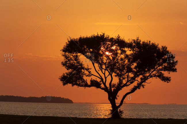 Tree silhouetted at sunrise