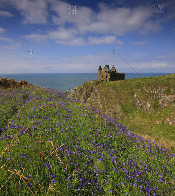 Bluebells Dunskey Castle, Dumfries & Galloway
